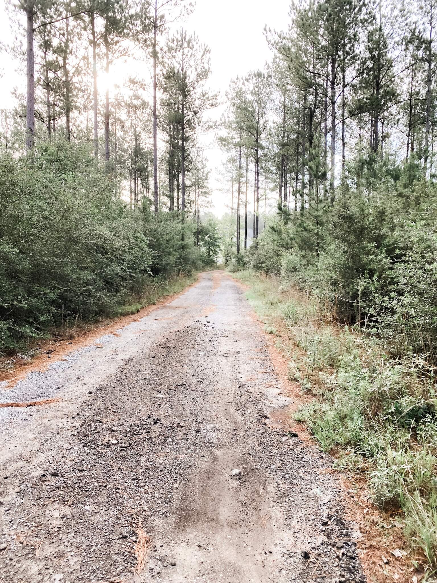 Gravel Driveway with trees on both sides. Taking back your health one step at a time.